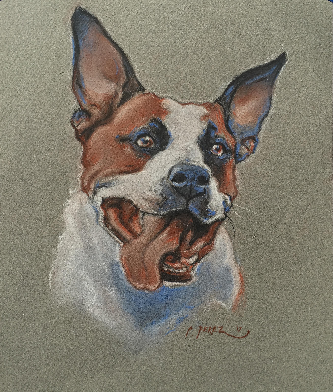 2619x3085 Custom Pet Portrait 8.5 X 11 Charcoal Drawing Gift Certificate