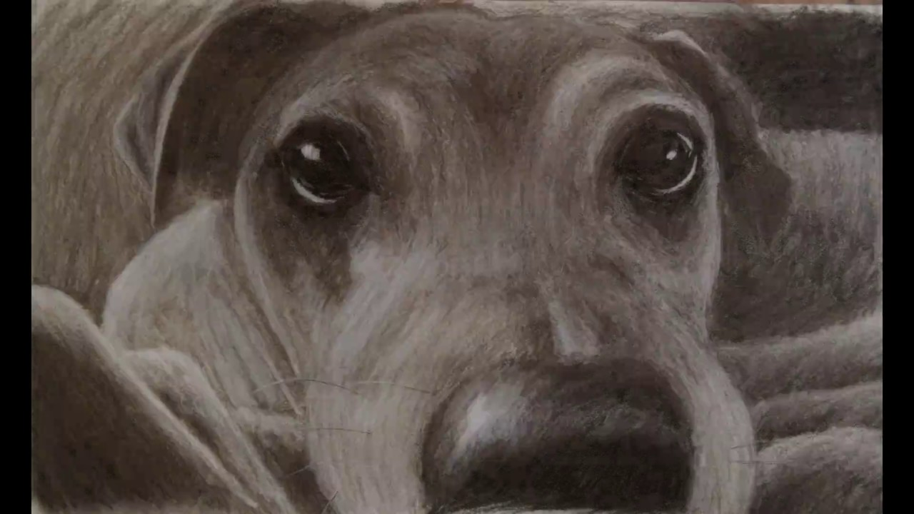 1280x720 Dog Drawing Charcoal Time Lapse