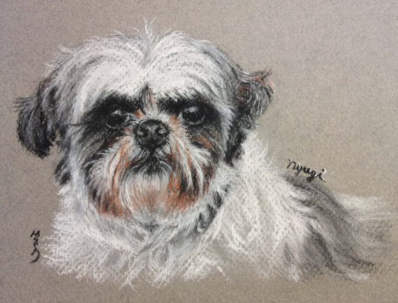 570x435 Shitzu Shihtzu Custom Pet Portrait Charcoal Drawing