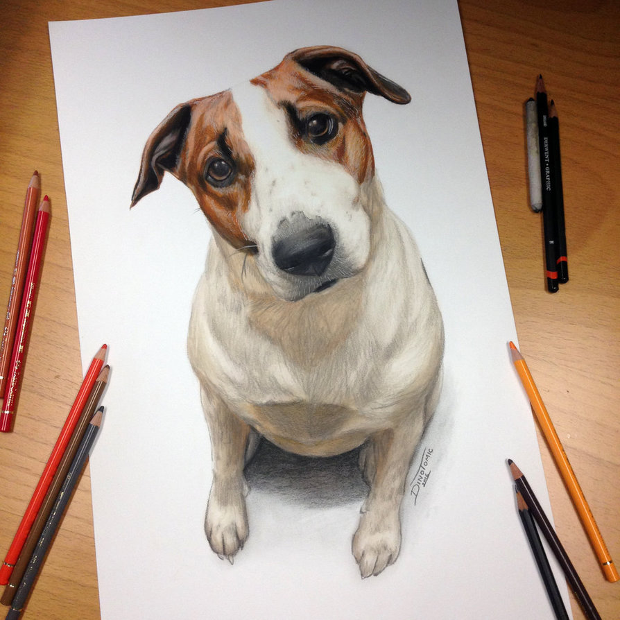 894x894 Dog Drawing By Atomiccircus