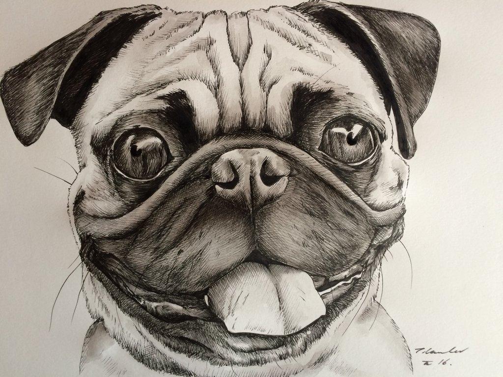 1024x768 Pug dog drawing painting art by billyboyuk on DeviantArt