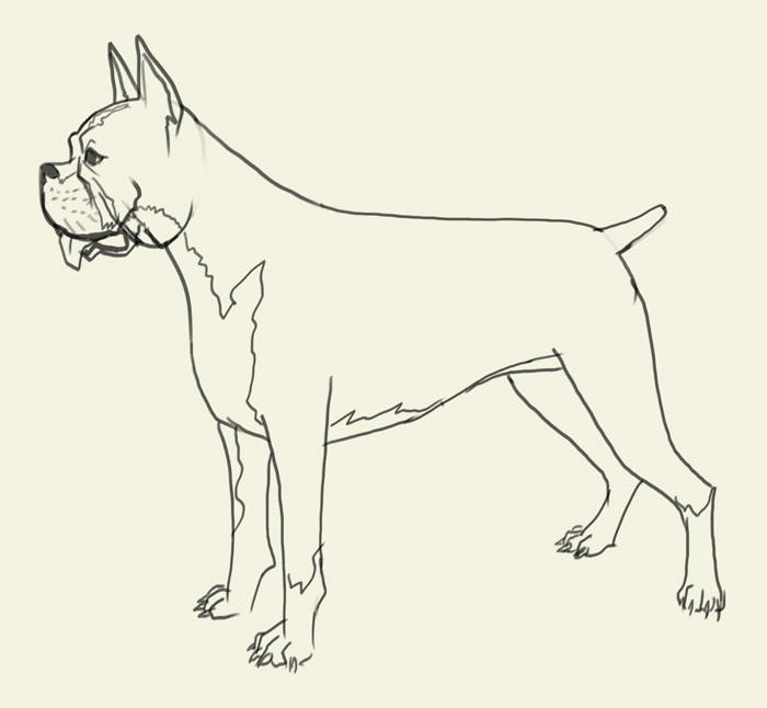 700x646 How To Draw Boxer