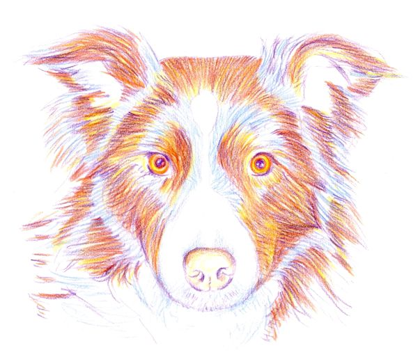 600x513 How To Draw A Dog