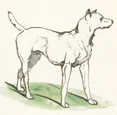 403x395 Simple Dog Drawing
