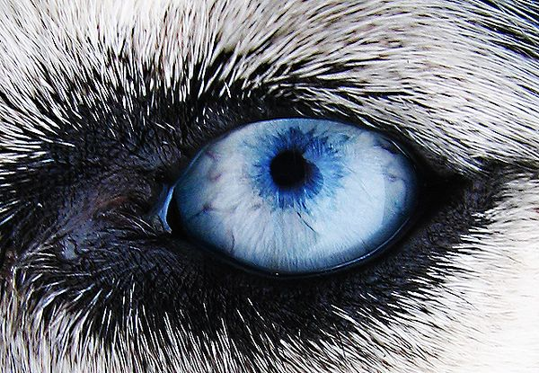dog eye drawing at getdrawings com free for personal use dog eye
