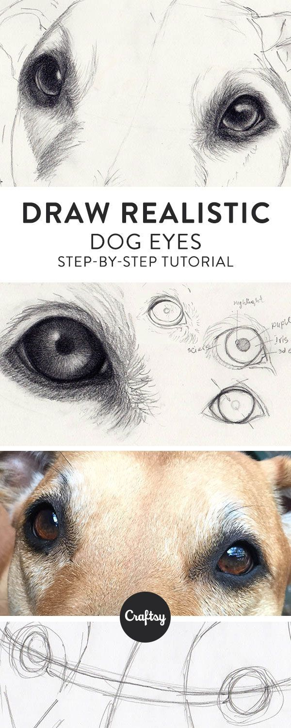 Dog Eyes Drawing at GetDrawings.com   Free for personal use Dog Eyes ...