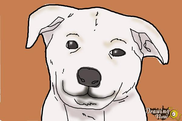 600x400 How To Draw A Dog Face