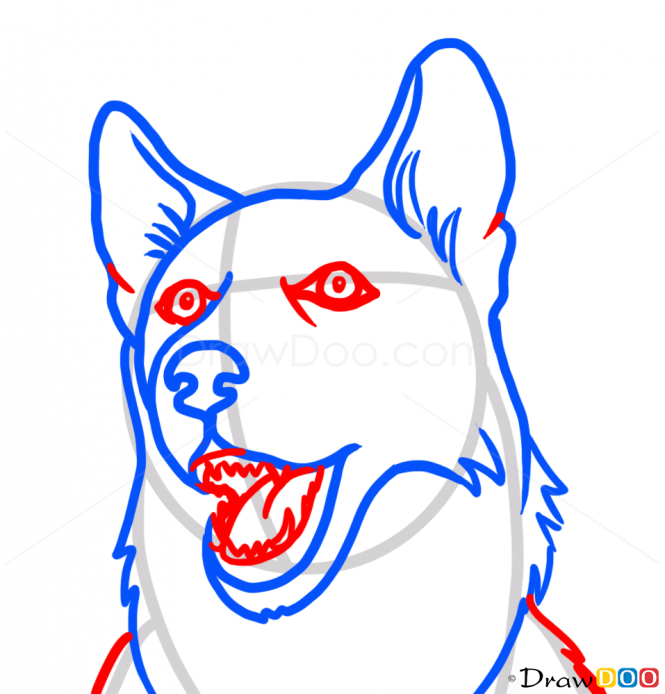 665x694 how to draw husky face dogs and puppies adult coloring pages