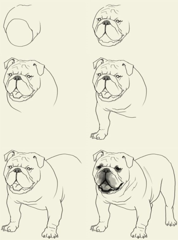 600x807 40 Simple Dog Drawing To Follow And Practice