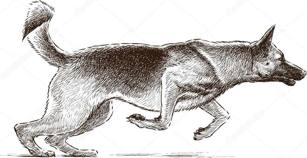 1023x528 Jumping Dog Stock Vector Alekseimakarov