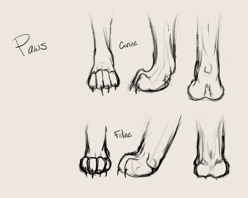 Dog Paw Drawing at GetDrawings.com | Free for personal use Dog Paw ...