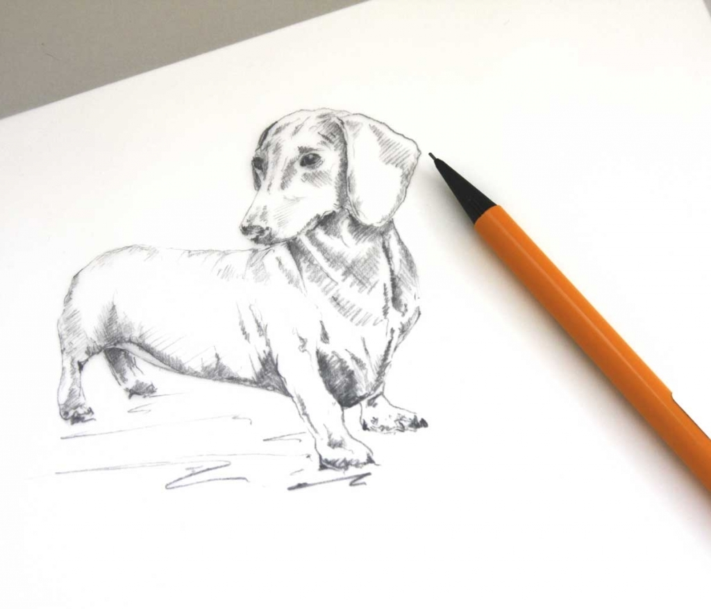 Dog Pencil Drawing Easy At Getdrawings Com Free For Personal Use