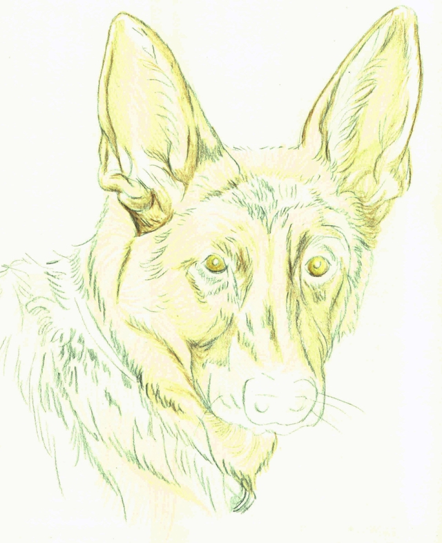 640x786 How Do You Draw A Beautiful Dog Using Colored Pencils Colored