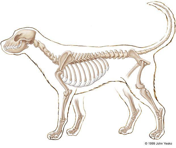 620x520 Skeleton Illustrations