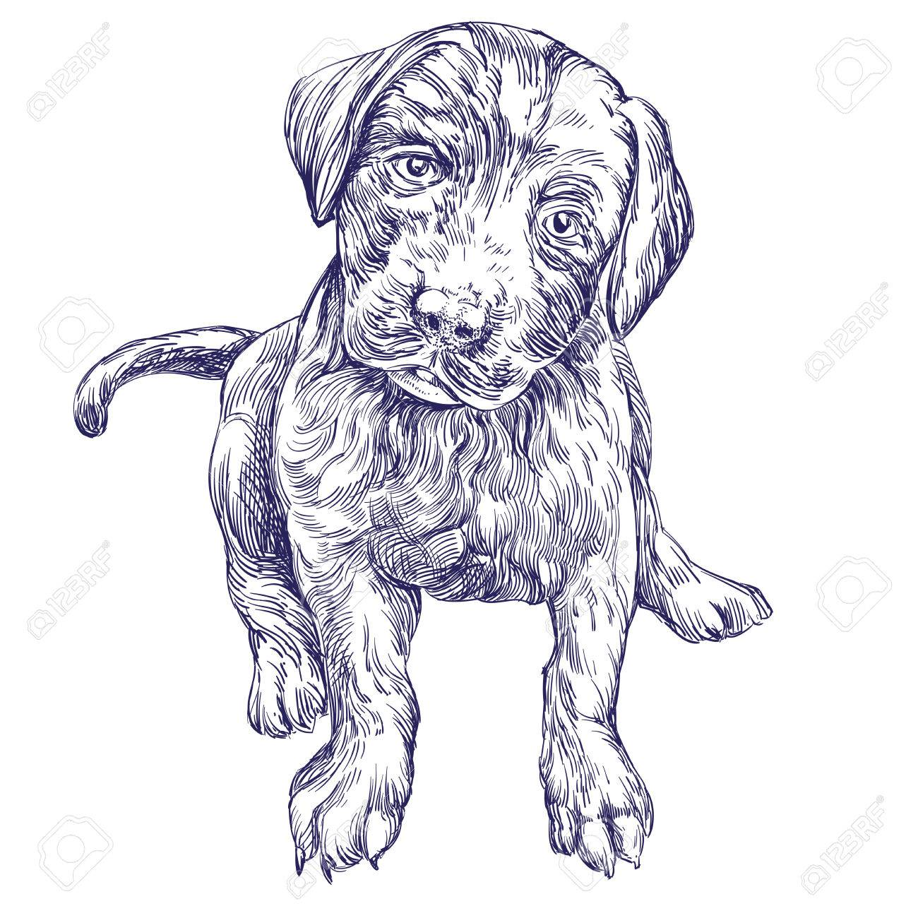 Dog Sketch Drawing at GetDrawings.com | Free for personal use Dog ...