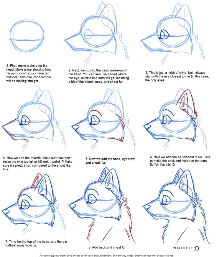 Dog Step By Step Drawing at GetDrawings com | Free for