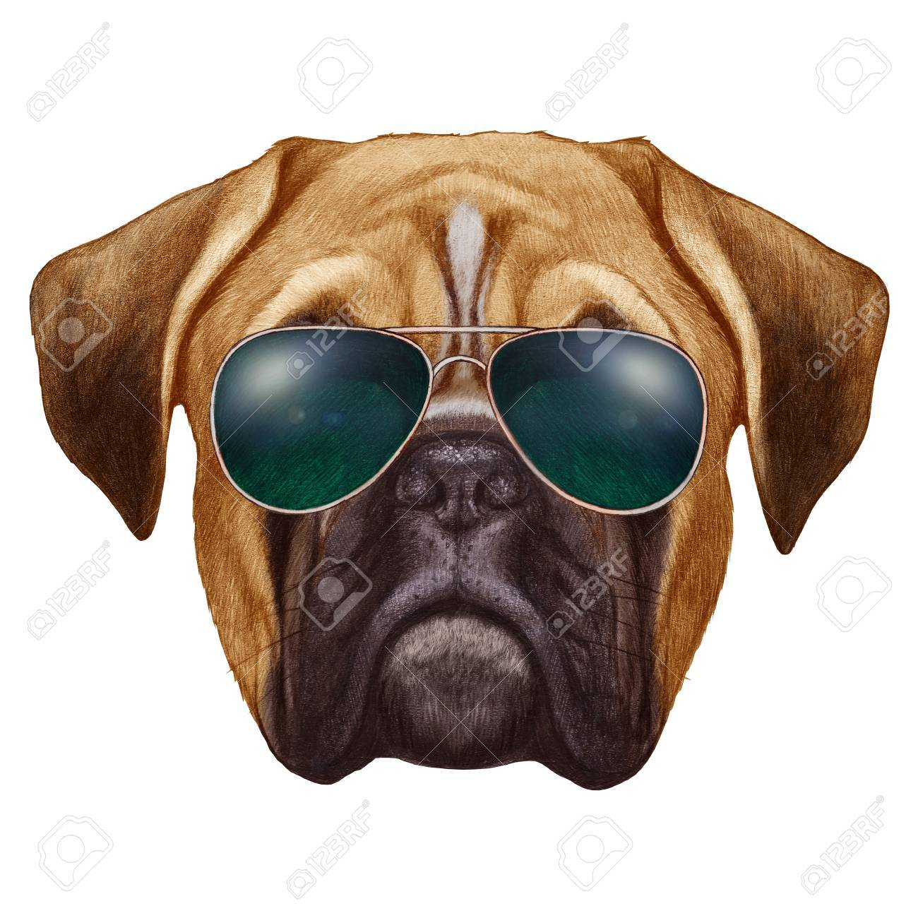 1300x1300 Original Drawing Of Boxer Dog With Sunglasses. Isolated On White