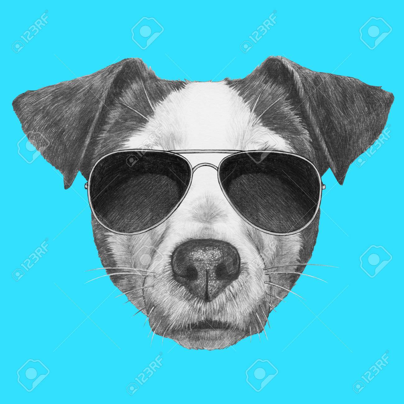 1300x1300 Original Drawing Of Jack Russell With Sunglasses. Isolated