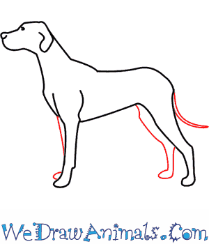 300x350 How To Draw A Dog