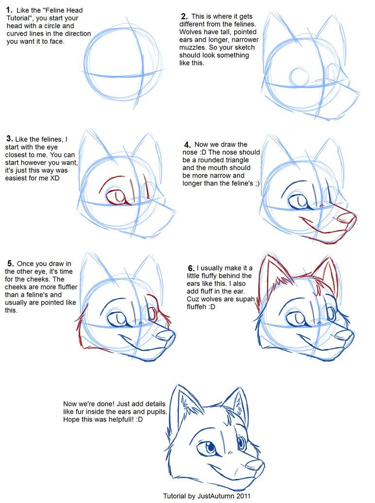 772x1036 How To Draw Canines Head By Justautumn On Character