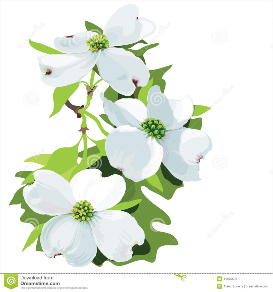 dogwood blossom drawing at getdrawings com free for personal use rh getdrawings com dogwood blossom clipart dogwood branch clipart