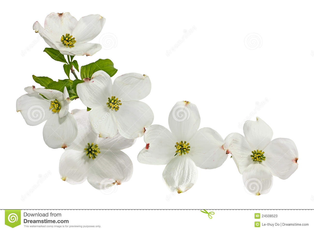 Pickin Me A Bouquet Of Dogwood Flowers Images - Flower Wallpaper HD