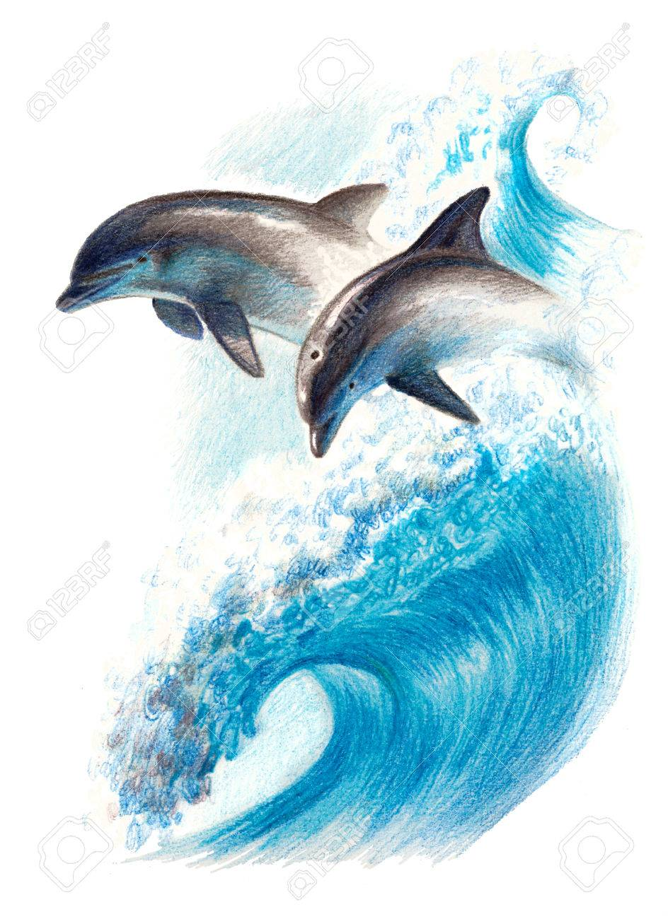 944x1300 Color Drawing Two Dolphins On A Wave. Watercolor Pencils Stock