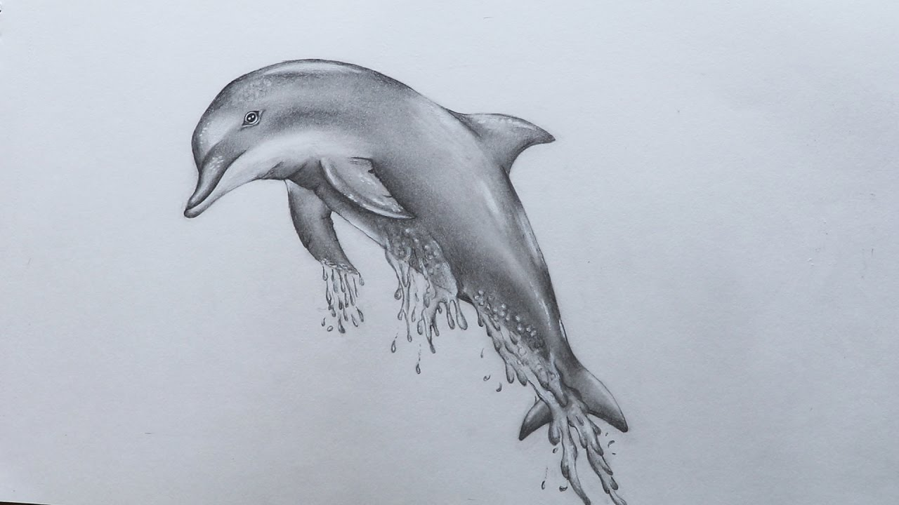1280x720 How To Sketch Dolphin