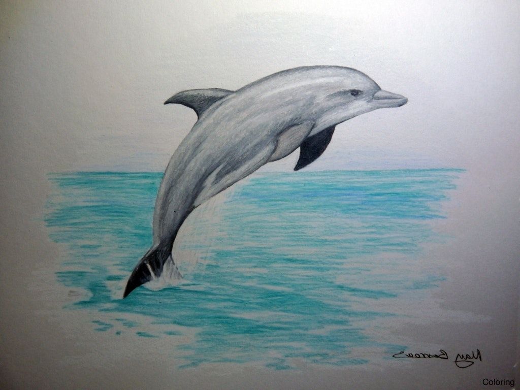 1024x768 Simple Dolphin Drawing Pictures To Draw How A Drawings