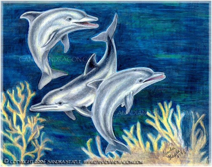 680x537 Canadian Dragon Fantasy Art Original Dolphins Color Pencil