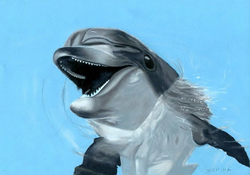 800x561 Dolphin Drawing