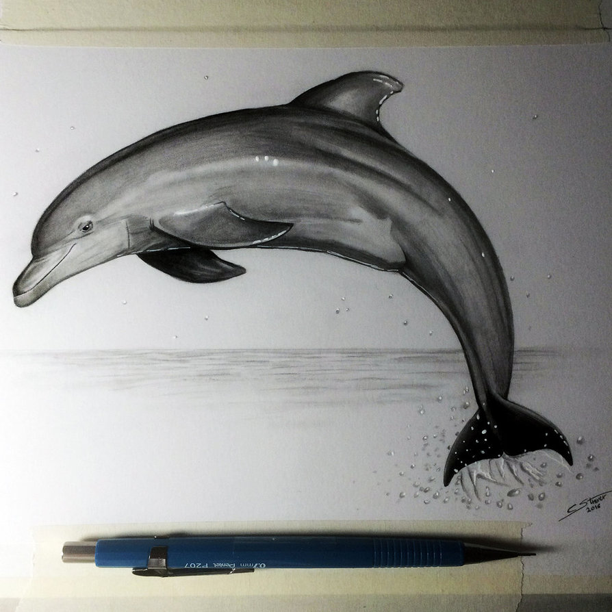 894x894 Dolphin Drawing Study By Lethalchris