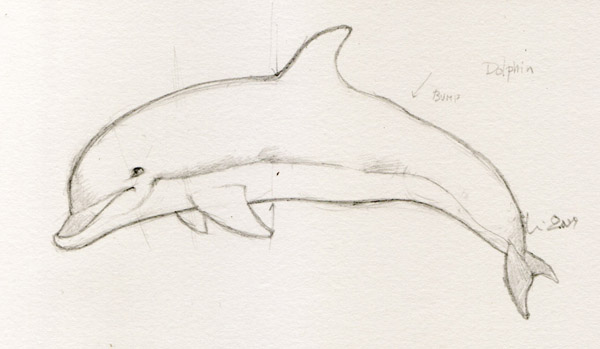 600x349 Dolphin Drawings In Four Easy Steps Drawings, Easy And Drawing Ideas
