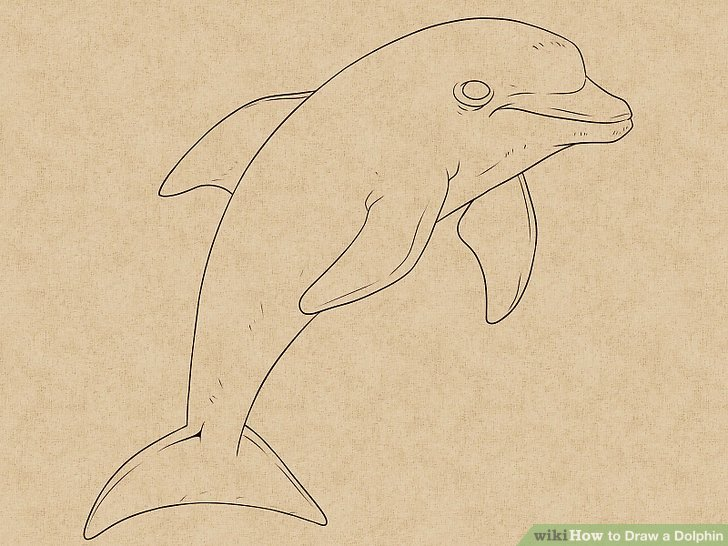 728x546 How To Draw A Dolphin 14 Steps (With Pictures)