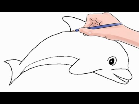 480x360 How To Draw A Dolphin Easy Step By Step