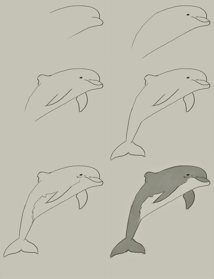 700x913 How To Draw A Dolphin Jumping Step By Step