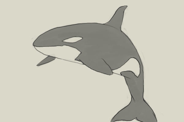 600x400 How To Draw Killer Whale