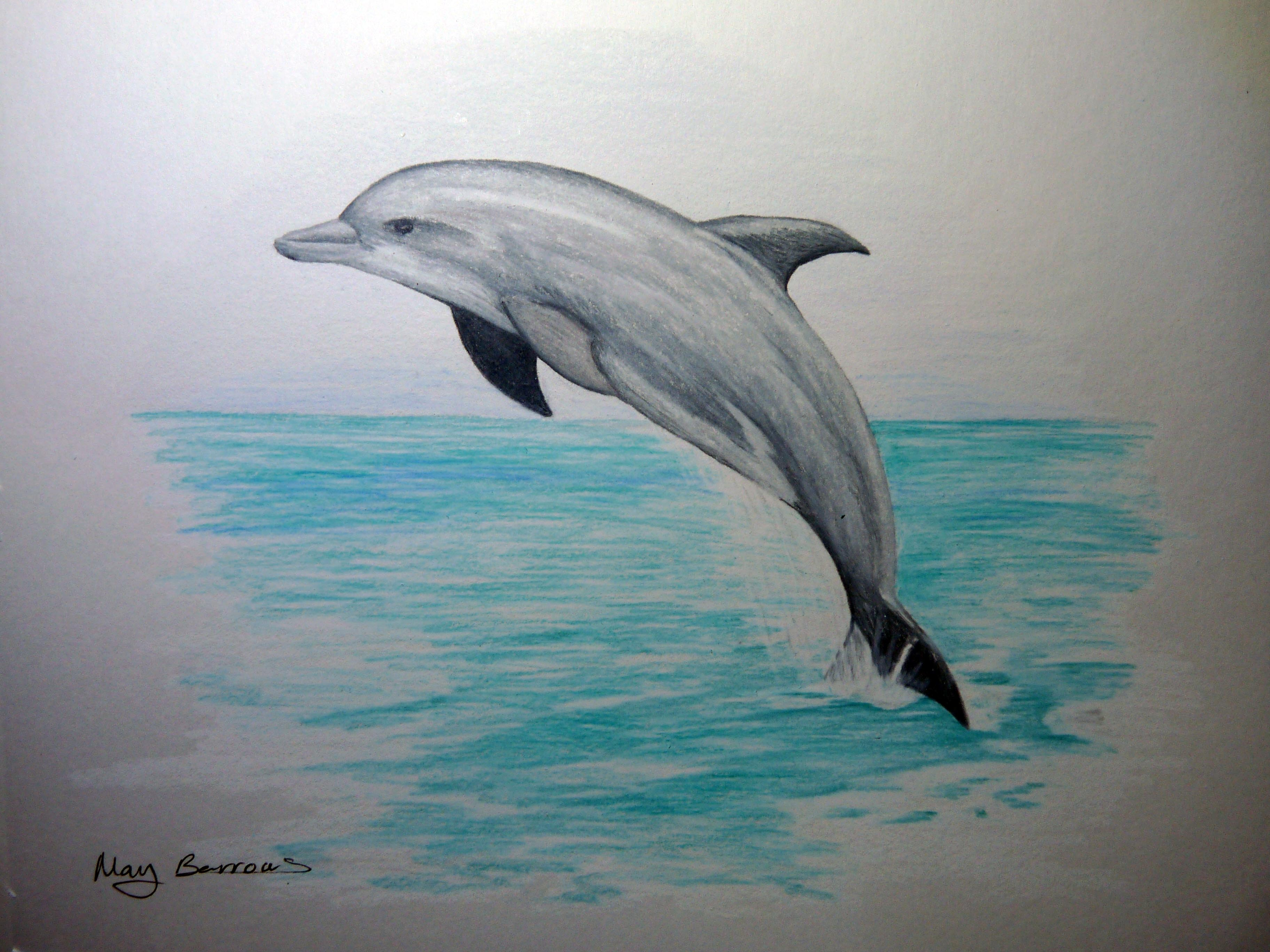 3648x2736 Largest What Color Is A Dolphin Pencil Drawings Of Dolphins 1000