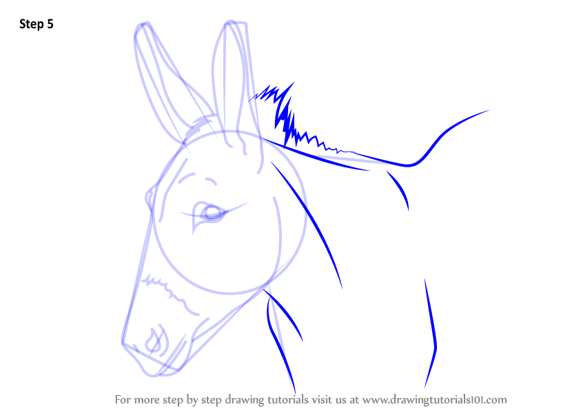 Donkey Face Drawing At Getdrawings Com Free For Personal Use