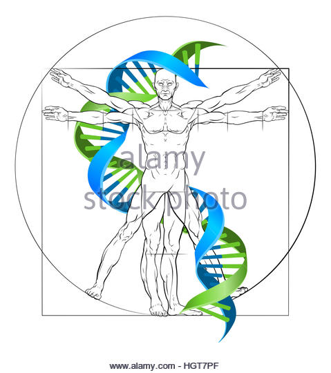 479x540 Double Helix Cut Out Stock Images Amp Pictures