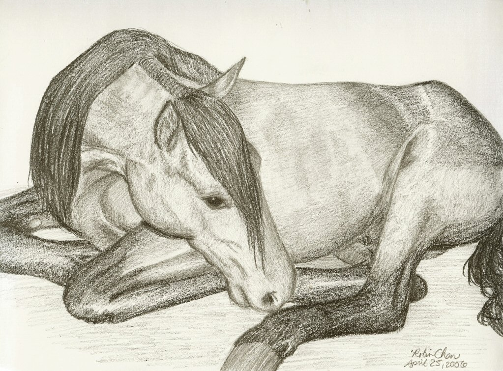 1023x755 Horse Lying Down By Meihua