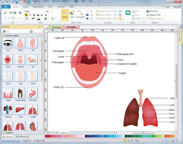600x473 Human Organs Diagrams
