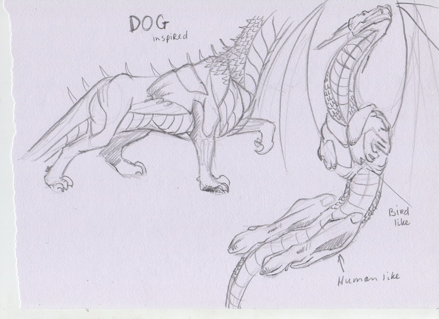 900x654 Other Dragon Anatomy Types By Duconl