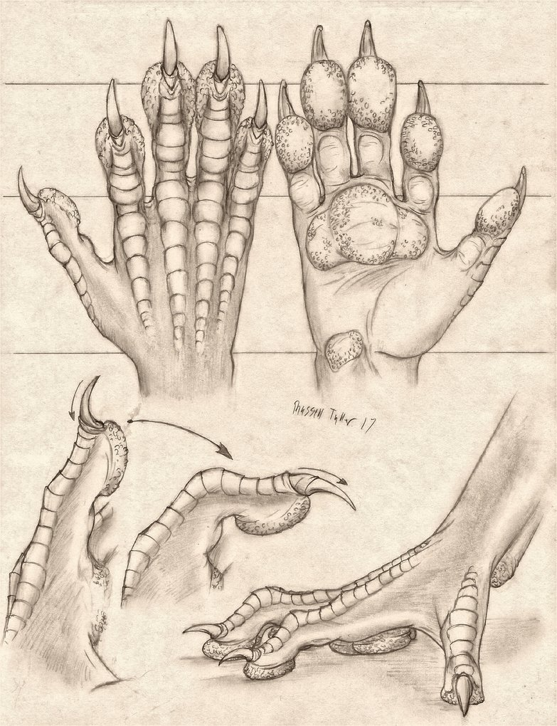 783x1020 Pawed Dragon Hand Anatomy Study By Russelltuller