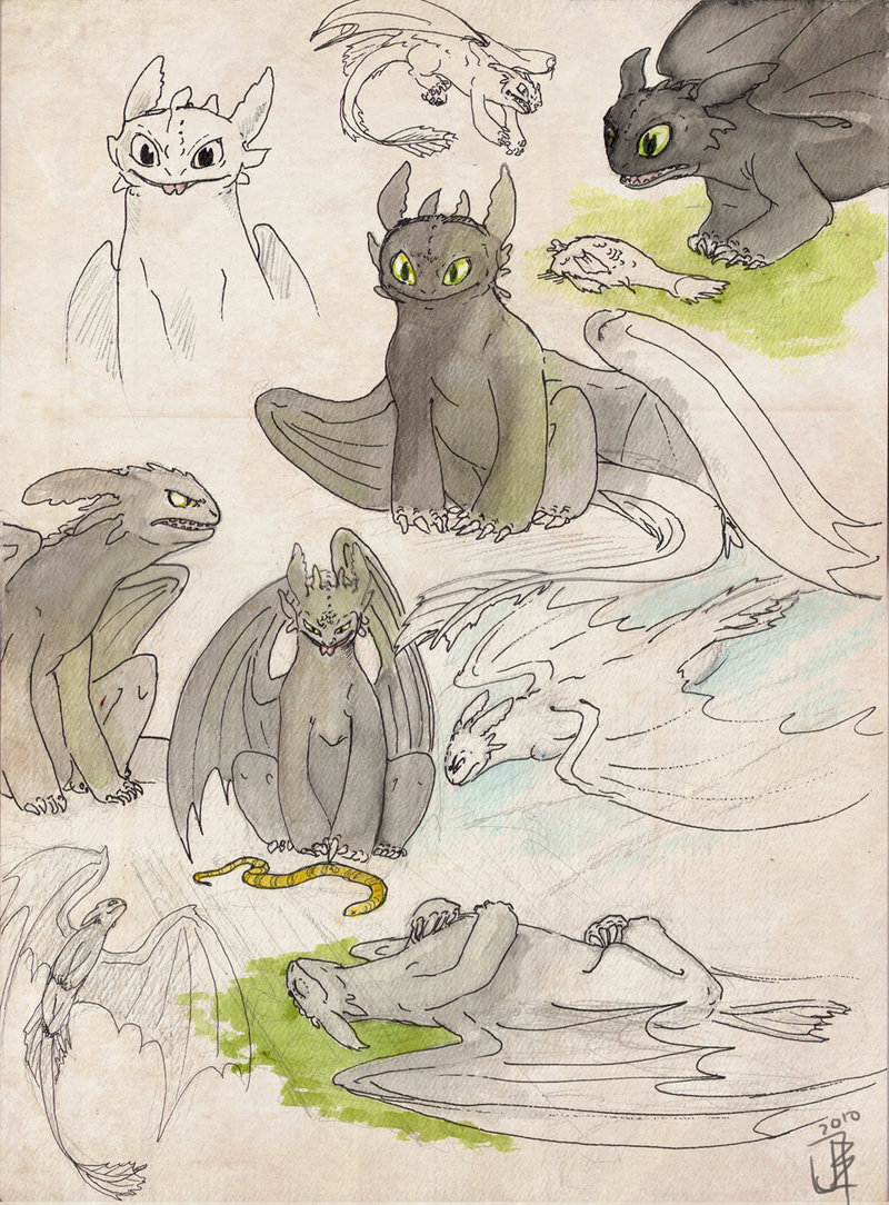 800x1084 Toothless Sketches By Janey Jane