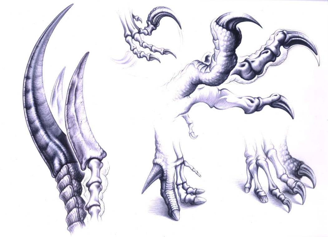 1052x760 Dinosaurs Claws By Paleopastori