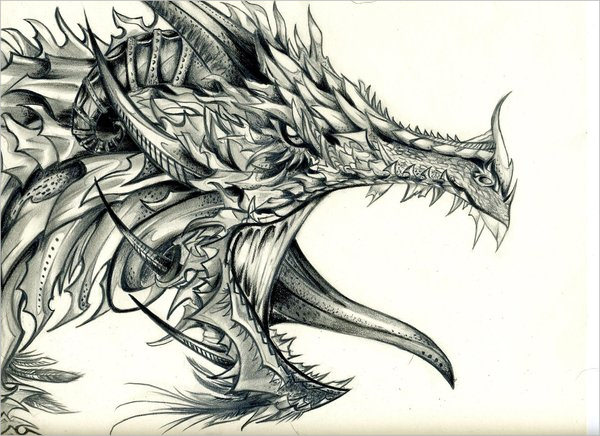 600x436 21+ Realistic Dragon Drawings Free amp Premium Creatives