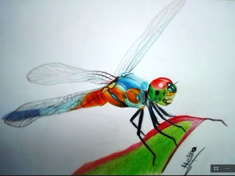 Dragonfly Pencil Drawing At Getdrawings Com Free For Personal Use