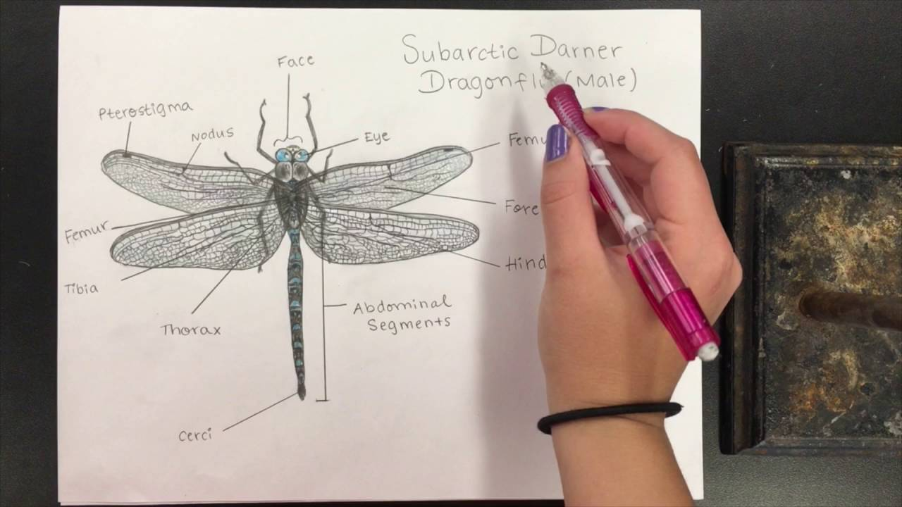 1280x720 How To Do A Scientific Drawing
