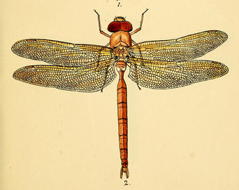 340x270 Printable Dragonfly Etsy